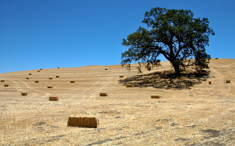 Central California farm field in fall, near Paso Robles, CA.