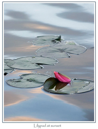 Waterlilies and Lotuses, Watch out Monet