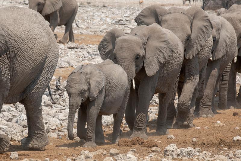 Namibia 69A8150.jpg