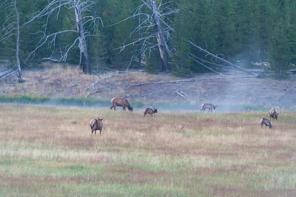 Yellowstone Prismatic Spring 2017
