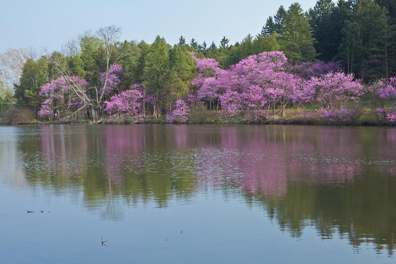 Spring12-1642.jpg