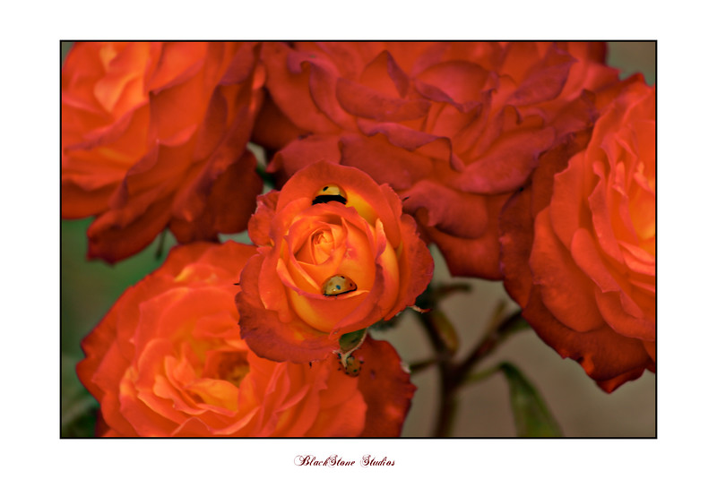MATTED FLOWERS-2.jpg