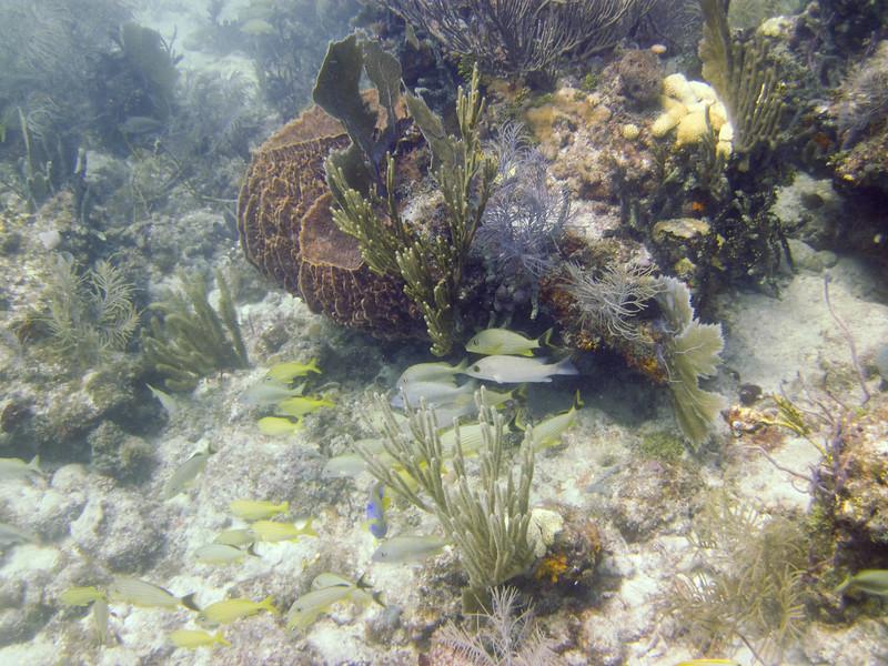 islamorada-diving-66.jpg