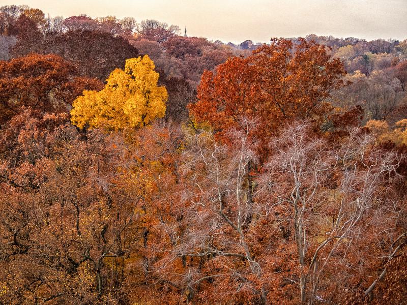 nov 18 - fall foliage.jpg