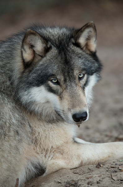 Seacrest Wolves_-55.jpg