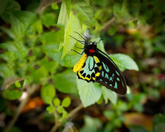 Butterfly World 2018