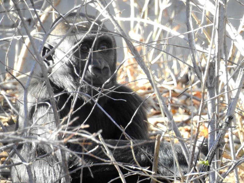 Denver Zoo 2018 (2628).JPG