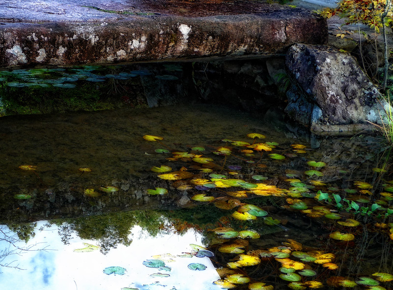 Pond1_Upload.jpg