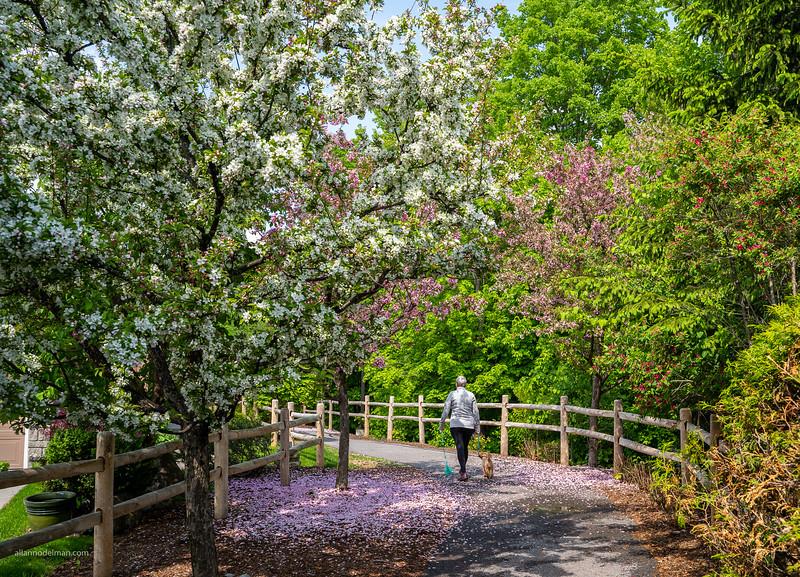 Tweedsmuir on the Park in the Spring
