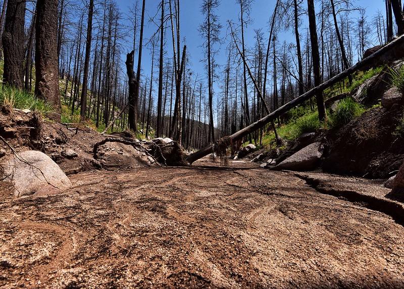 NEA_0281-7x5-Wills Canyon Trail.jpg