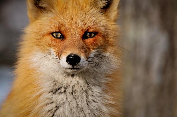 Northern Colors - 北海道の動物たち -