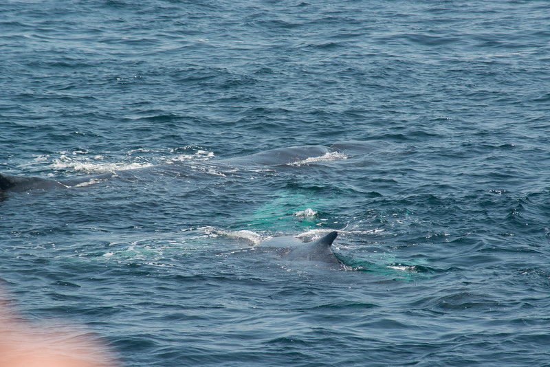 humpbacks-4146.jpg
