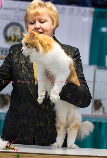 CatShow2014161.jpg