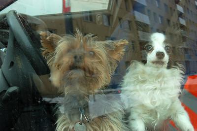 TWO DOG PRISONERS