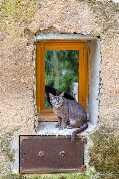 Le chat dans la fenetre