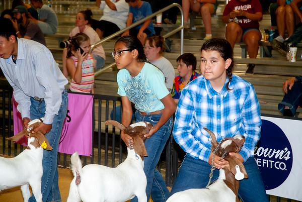 Woodward Summer Classic Goats