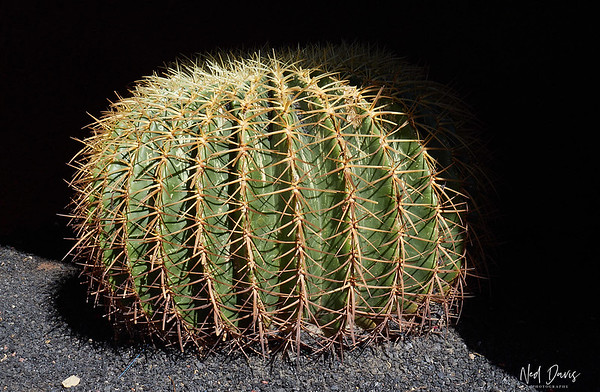 Jardin de Cactus - César Manrique Foundation