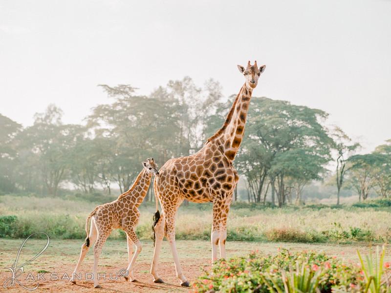 Safari-Africans-079.jpg