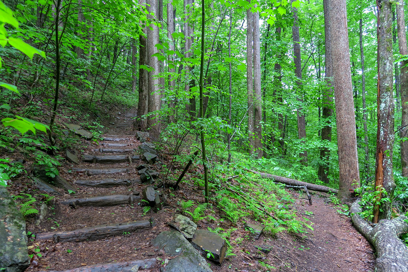 Barnett Branch Trail @ Lower Waterfall -- 3,480'