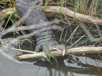 Alligator Adventure, SC