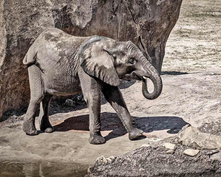 Elephant_DSC0001-copy.jpg