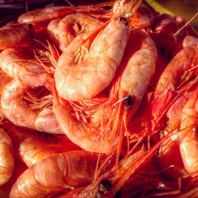 shrimp smogen sweden