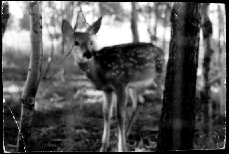 Who Deer.jpg