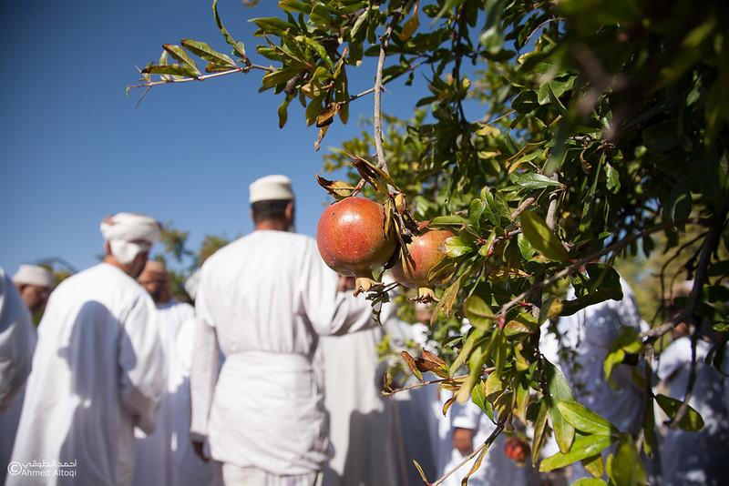 Pomegranate - Aljabal Alakhdhar (31)-Aljabal Alakhdhar-Oman.jpg