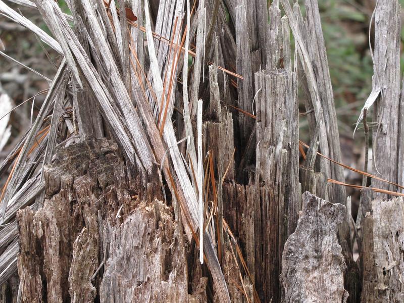 wood splinters 2.JPG