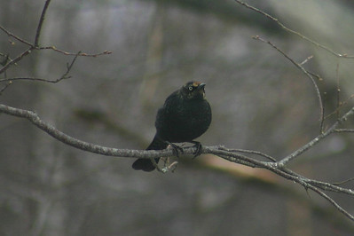 March Birds