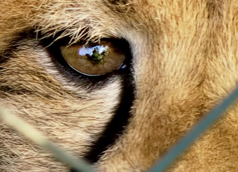 Autoportrét s gepardí dopomocí ;)