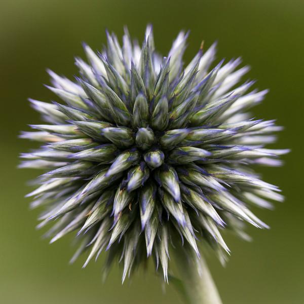 Macro Flower-3940.jpg