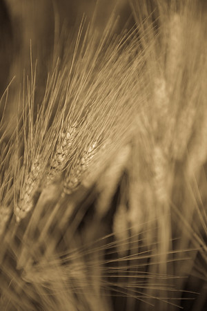 LeBlanc Crops and Yard