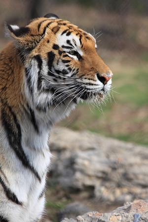 04-10-2009 Franklin Park Zoo