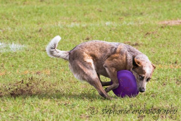 _MG_2397Up_dog_International_2016_StephaniellenPhotography.jpg