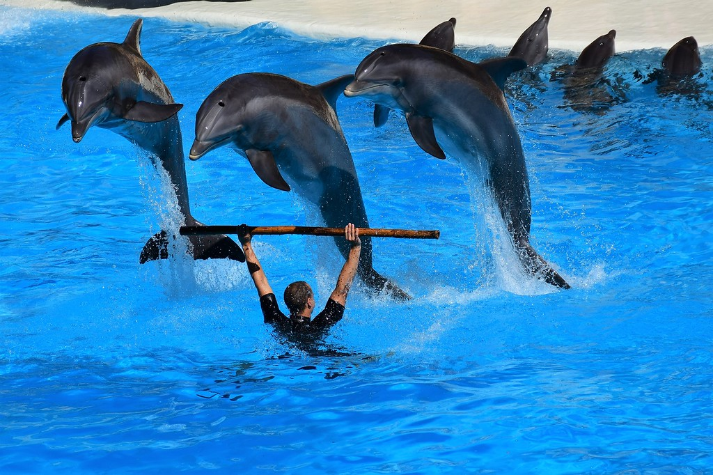 Dolphins forced to perform