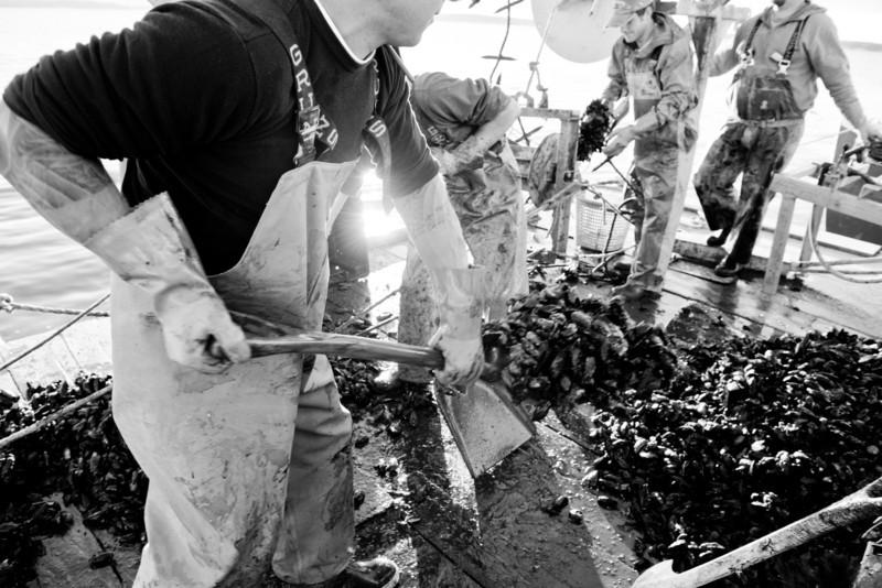 60. Matt Moretti, Bangs Island Mussels, mussel farm, Casco Bay, Maine, September 2013