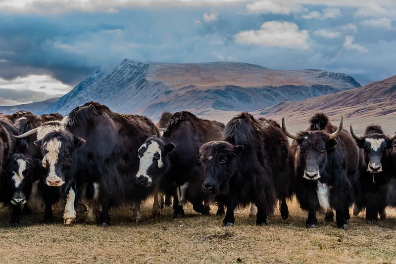 Mongolsko (447 of 496).jpg
