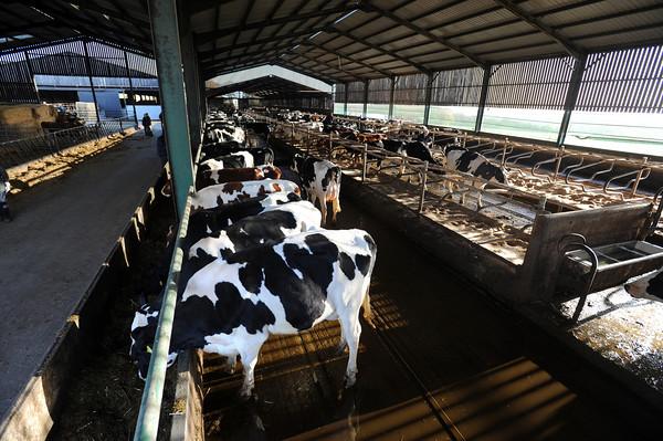 Lemington dairy sale Nov 2013