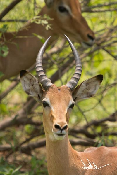 AntelopeS-4.jpg