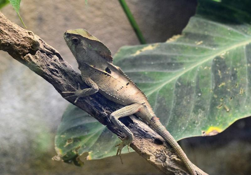 Lizard 2.jpg