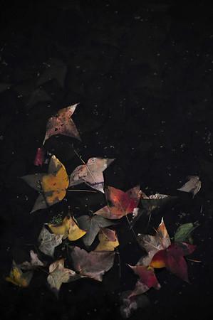 fallen leaves - 2009