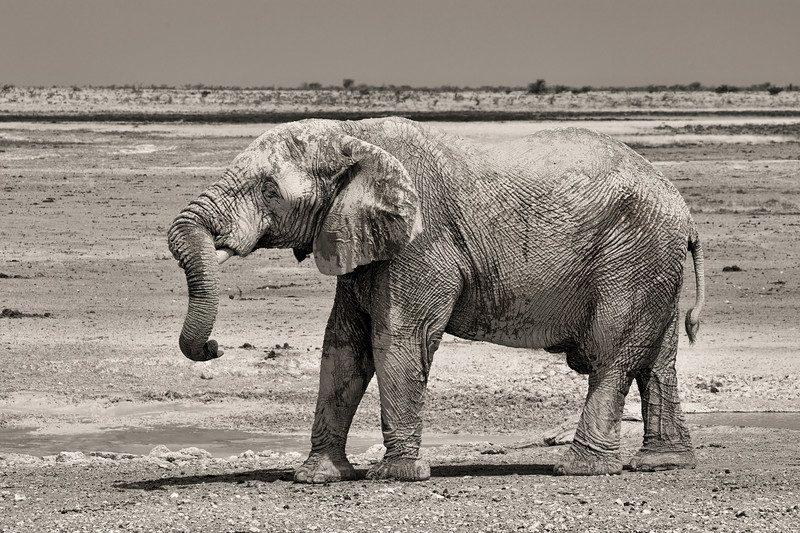 Namibia 69A8411.jpg