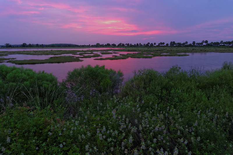 Purple Sky and Dotted Horsemint - During sunrise over Lighthouse Pool