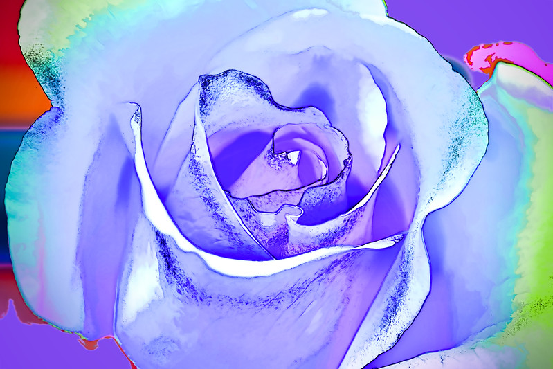 Macro close-up of Valentine's Day rose. Abstract photograph painting artwork photography photo photographs Abstract photograph painting artwork photography photo photographs.