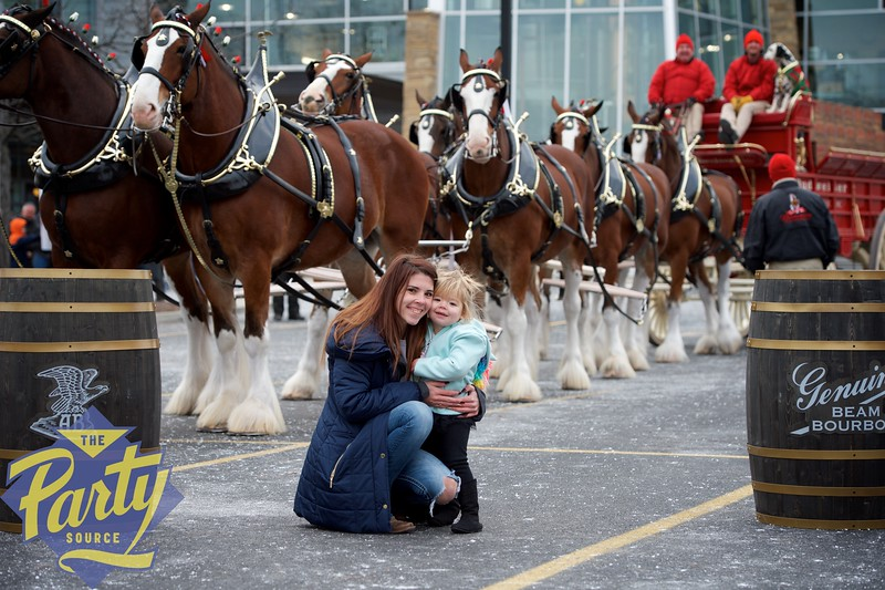 Clydesdale Portraits 41.jpg