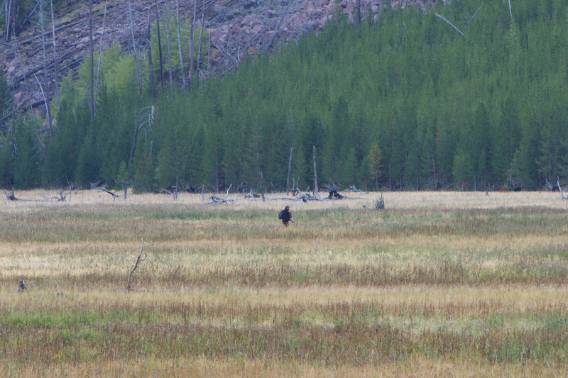 02_Yellowstone National Park_Montana_Wyoming-4.jpg