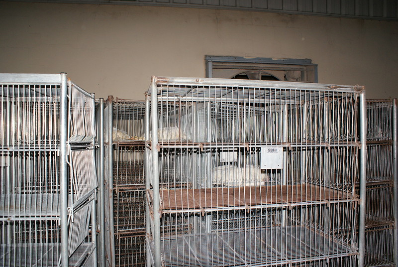 Kingersheim-poules-17.jpeg