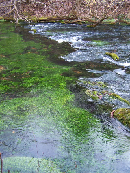 Blue Spring outflow