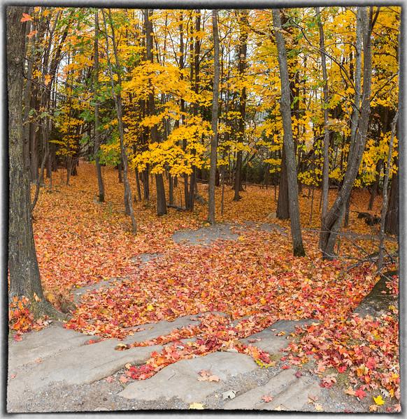 Carpet of Leaves Old Quarry Trail Kanata